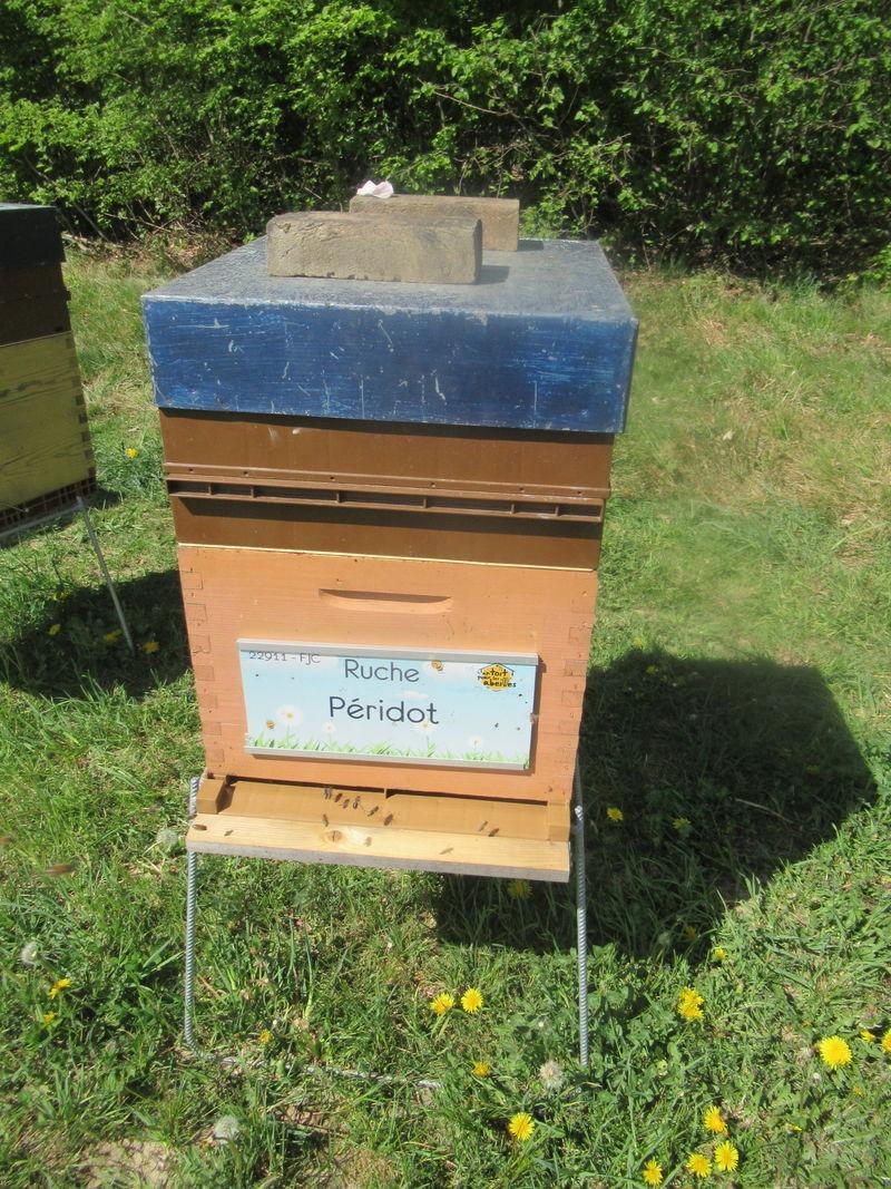 La ruche Péridot
