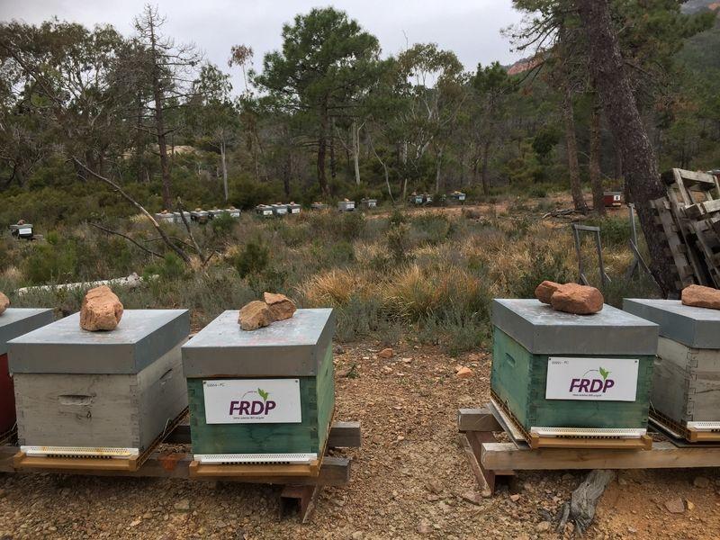 La ruche FRDP