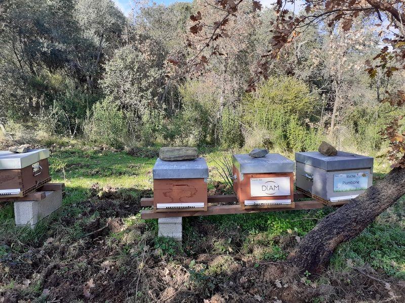 La ruche DIAM BOUCHAGE SAS
