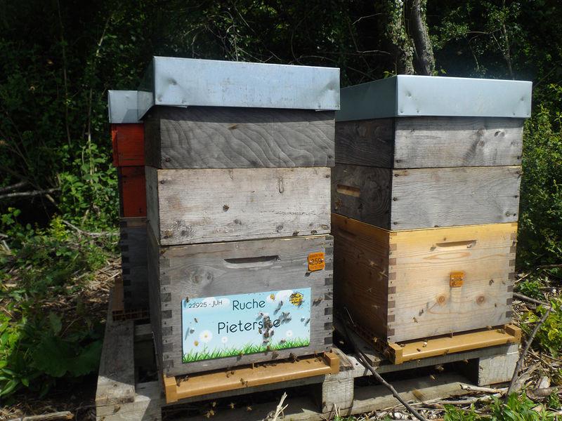 La ruche Pietersite