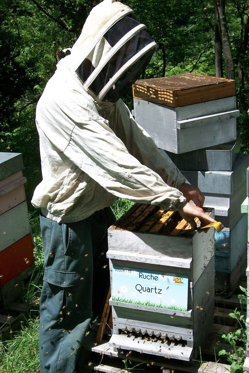 La ruche Quartz