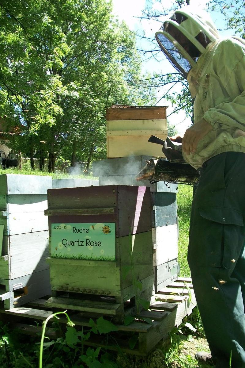 La ruche Quartz Rose