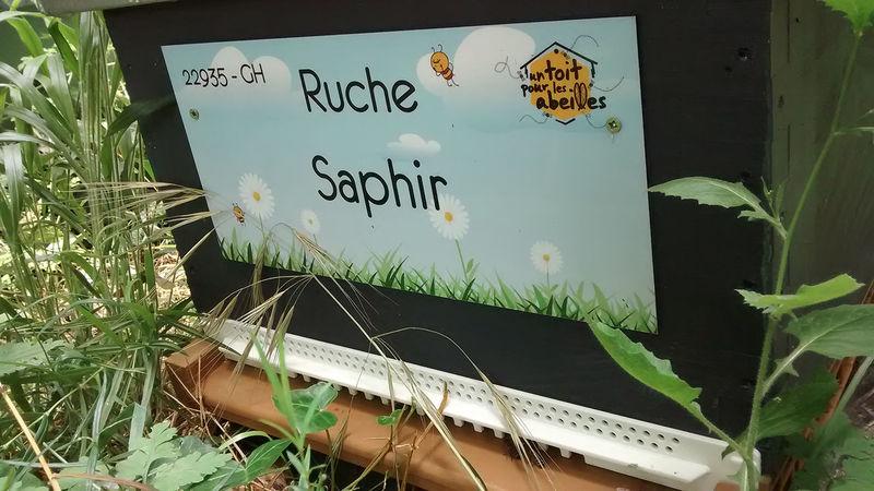 La ruche Saphir