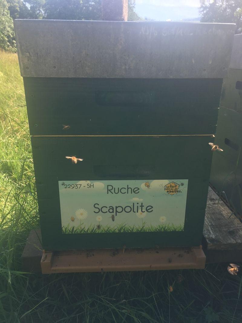 La ruche Scapolite