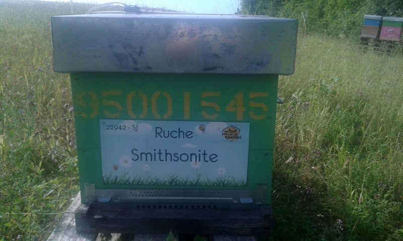 La ruche Smithsonite