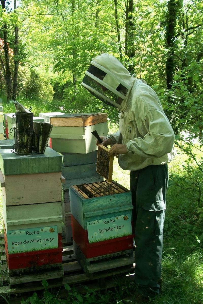 La ruche Sphalerite