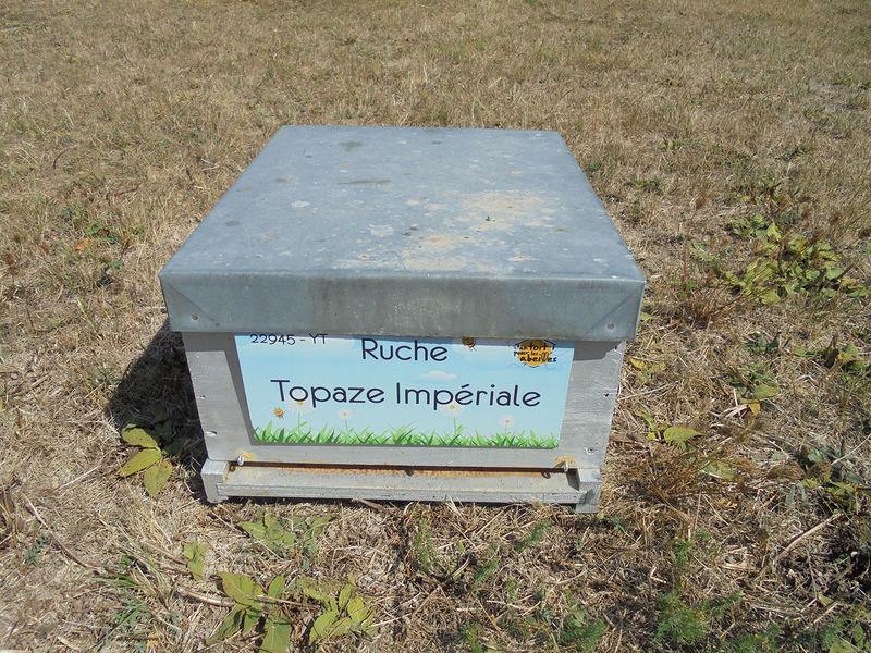 La ruche Topaze Impériale
