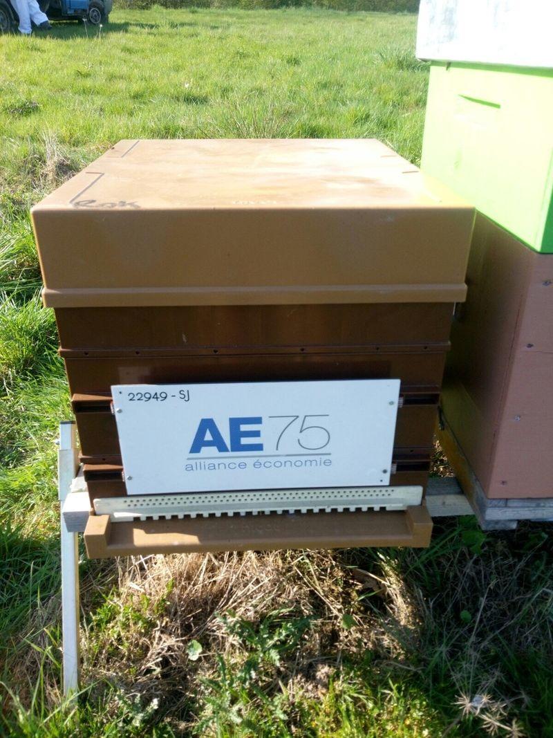 La ruche AE75