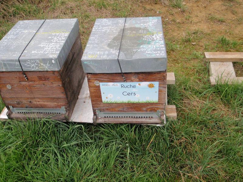 La ruche Cers