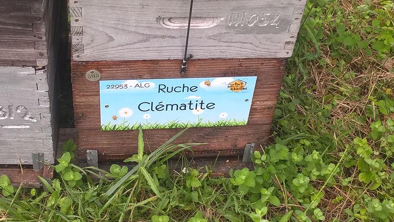 La ruche Clématite