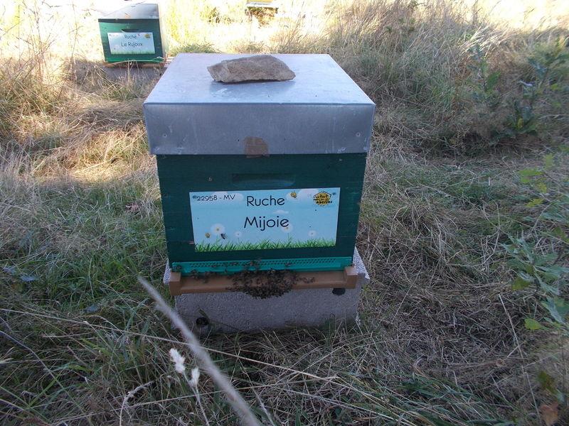 La ruche Mijoie