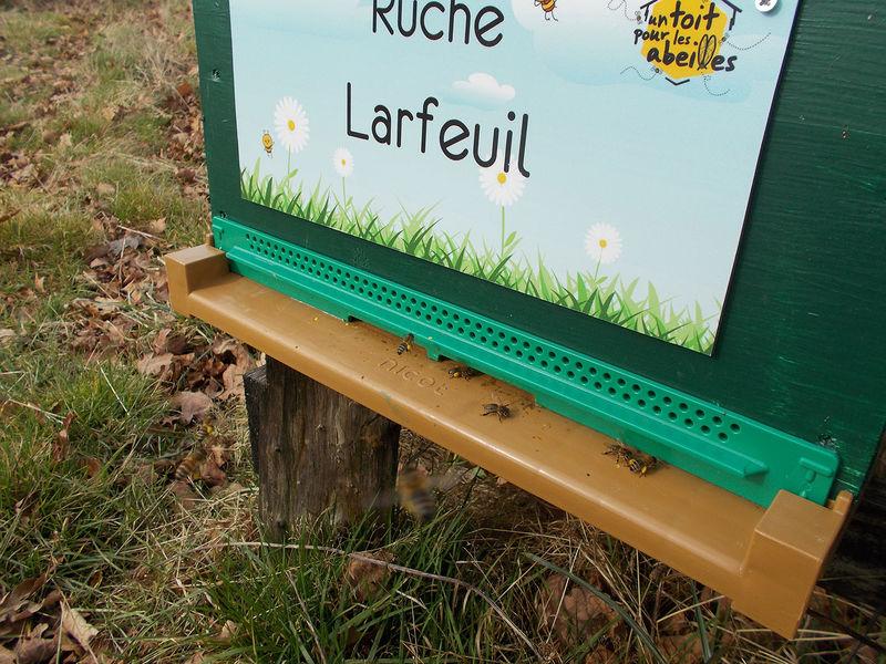 La ruche Larfeuil