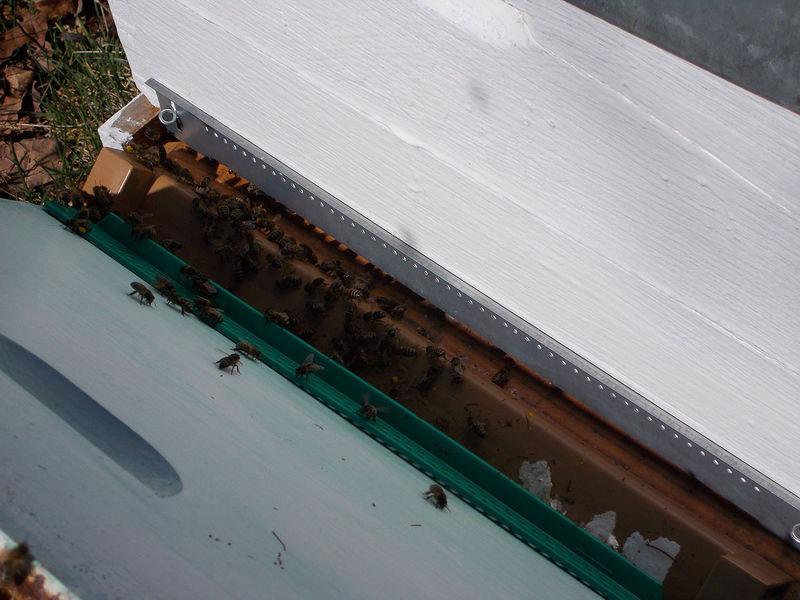 La ruche Peyrière