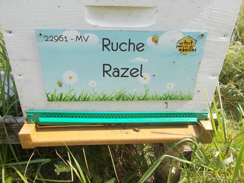 La ruche Razel