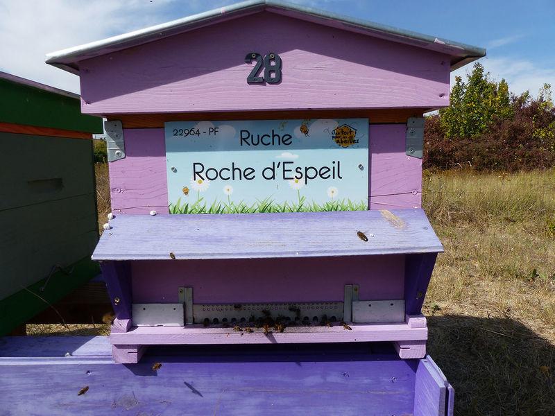 La ruche Roche d