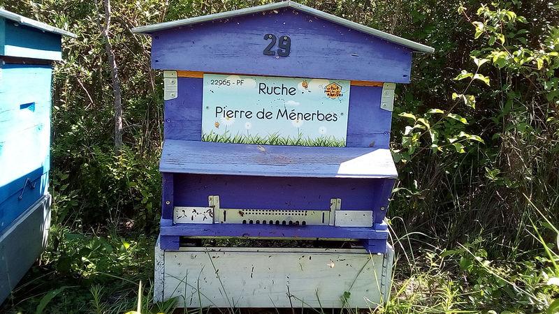 La ruche Pierre de Ménerbes