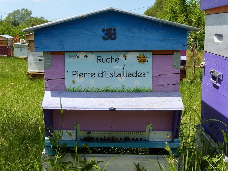 La ruche Pierre d