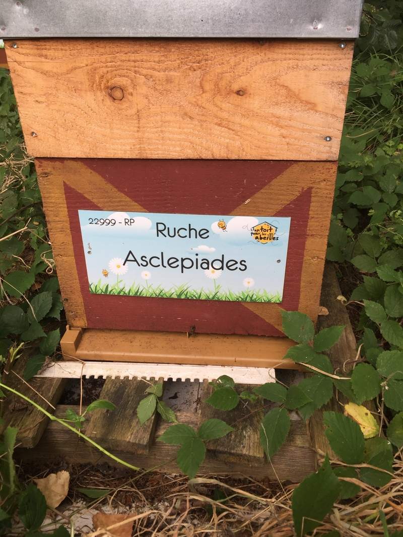 La ruche Asclepiades