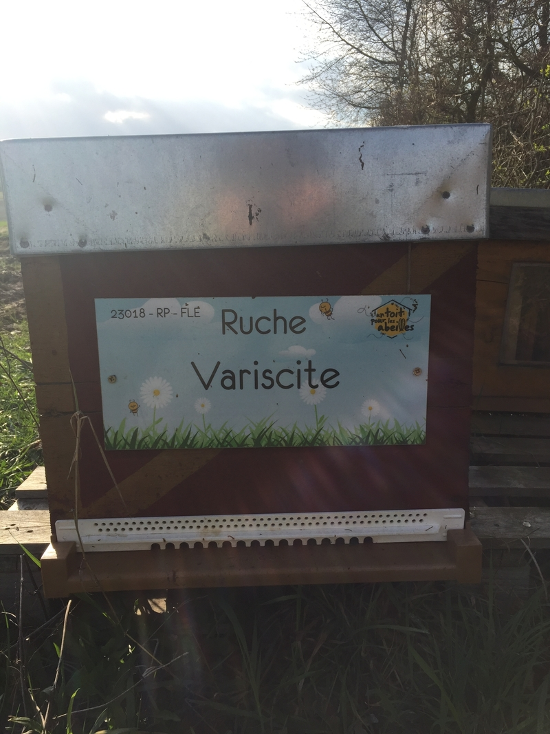 La ruche Variscite
