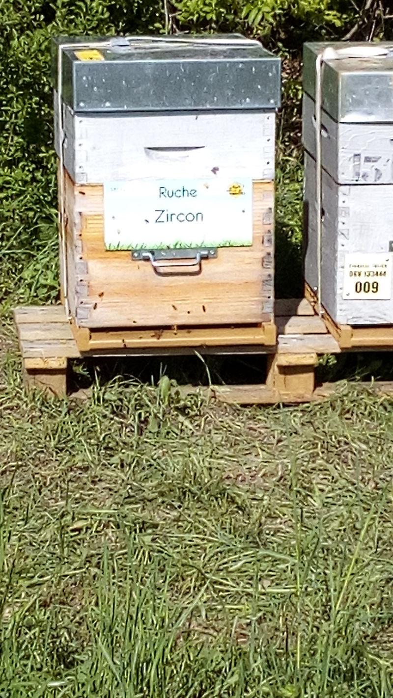 La ruche Zircon
