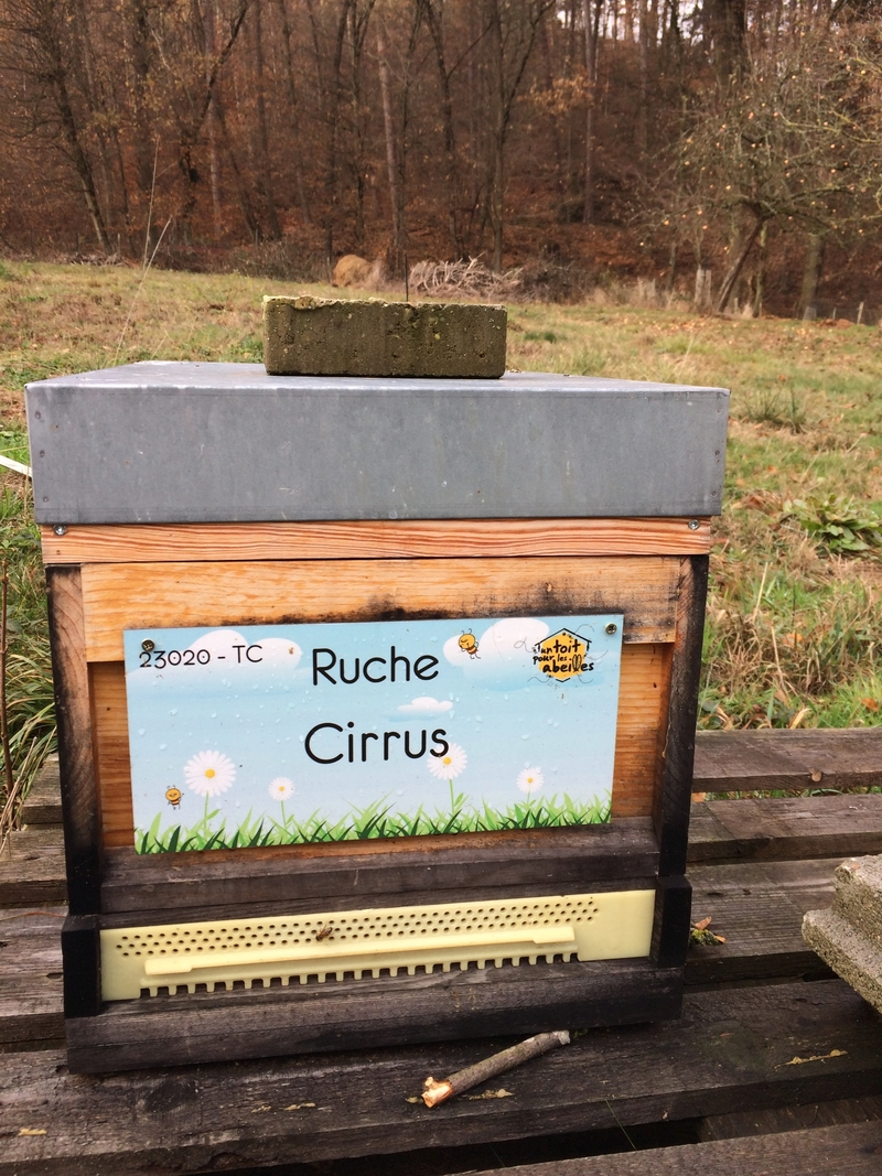 La ruche Cirrus