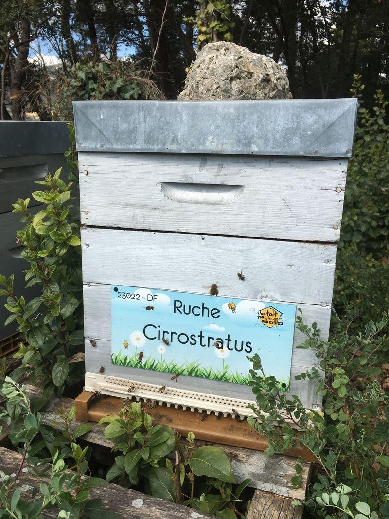 La ruche Cirrostratus
