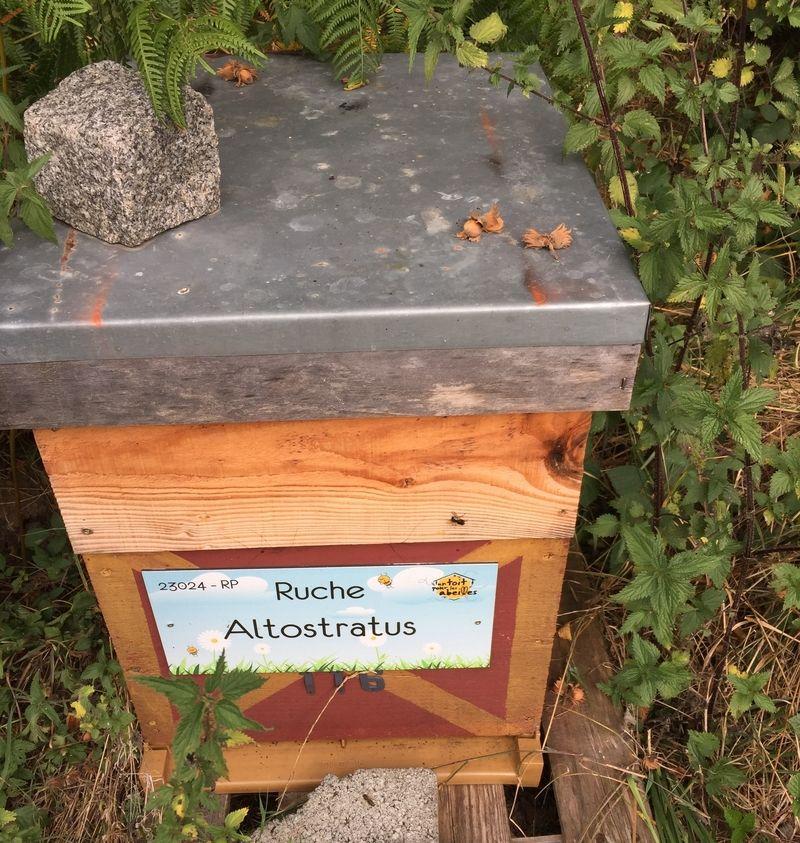 La ruche Altostratus