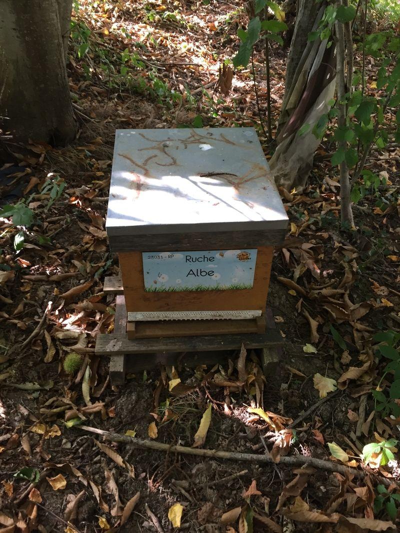 La ruche Albe