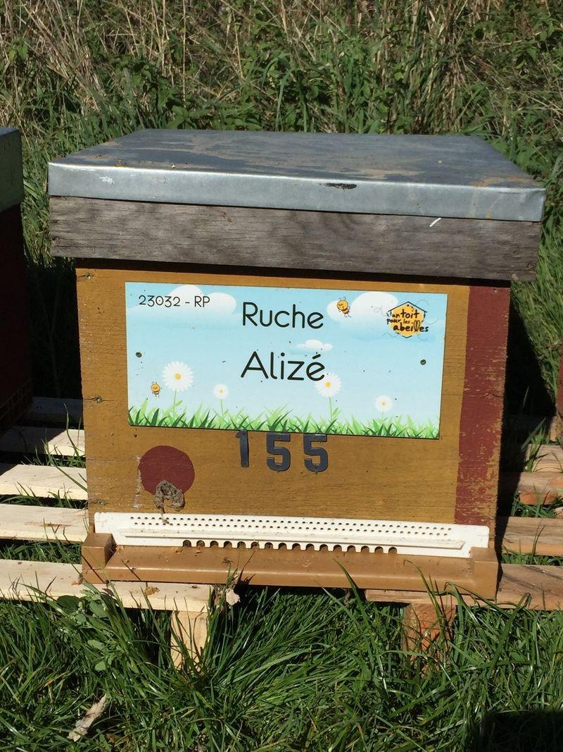 La ruche Alizé