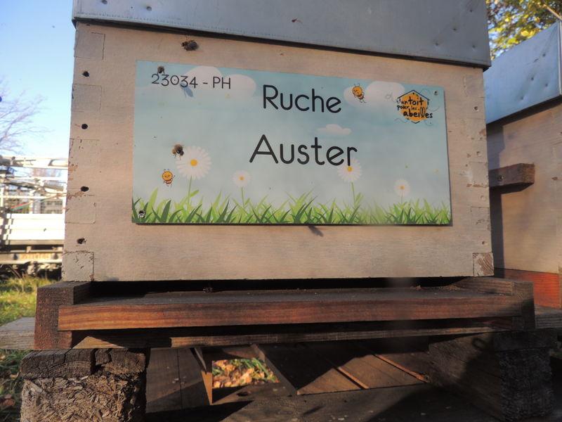La ruche Auster