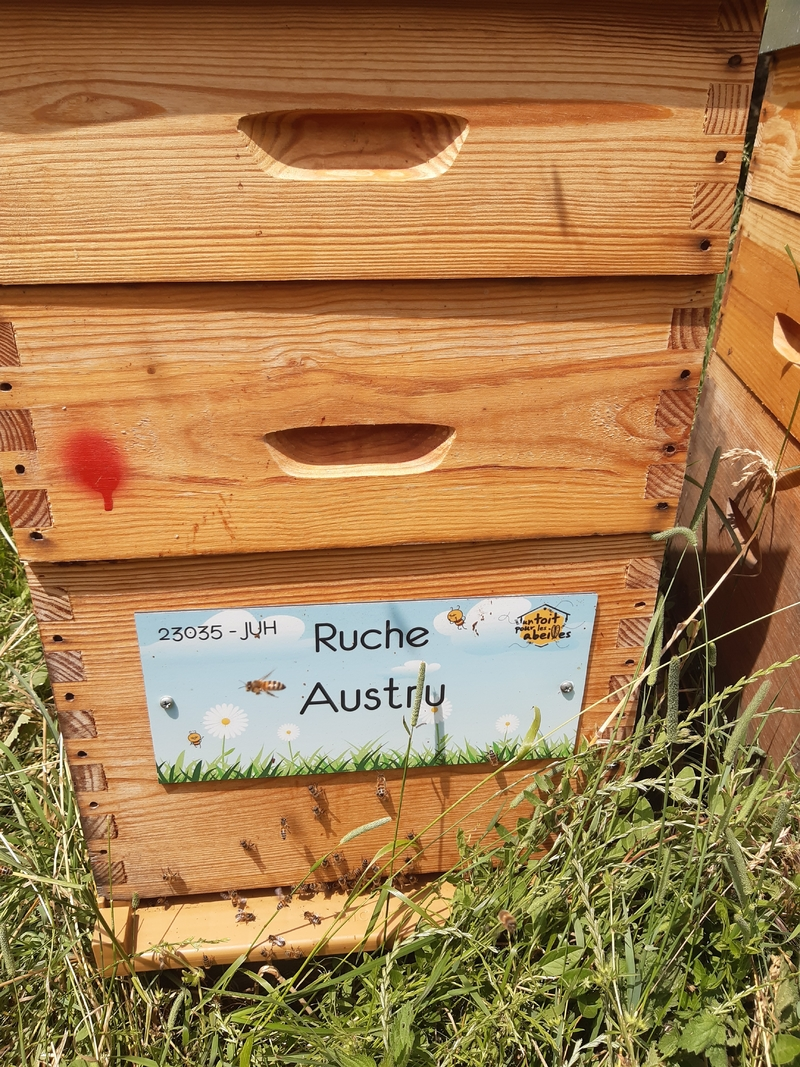 La ruche Austru