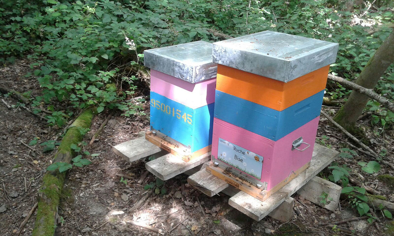 La ruche Bise
