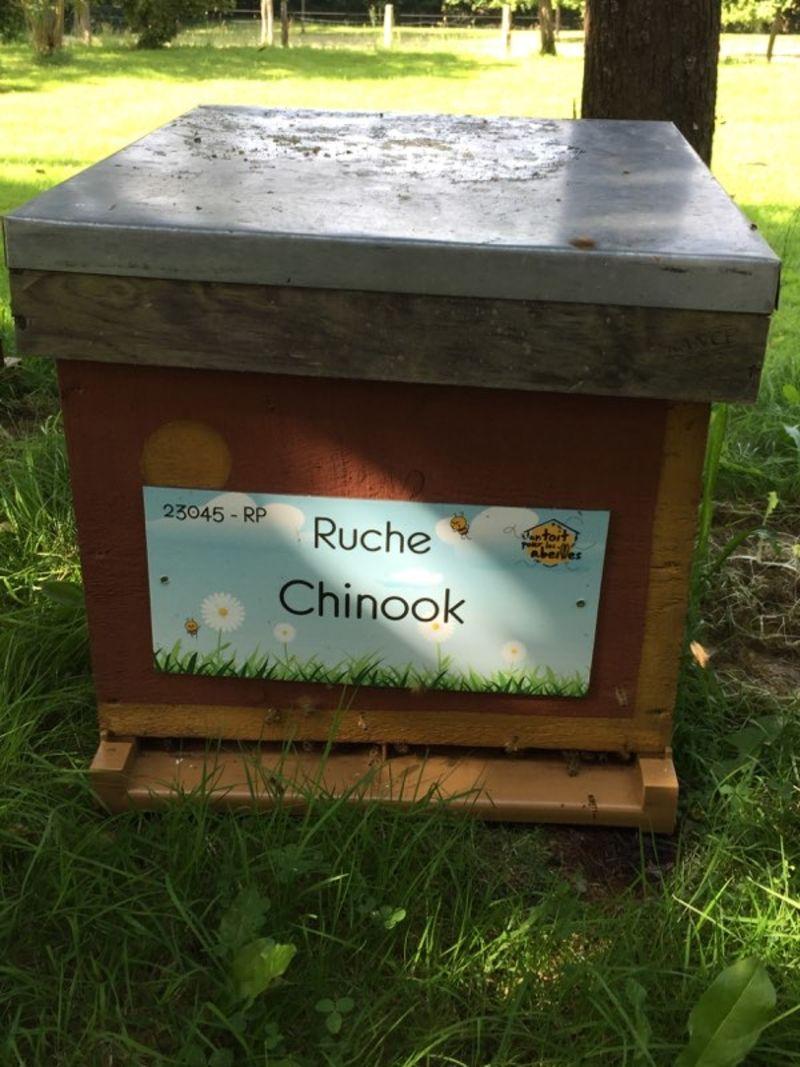 La ruche Chinook