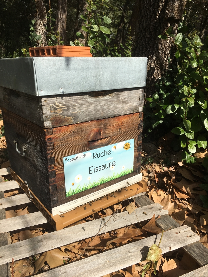 La ruche Eissaure