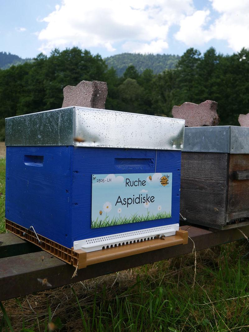 La ruche Aspidiske