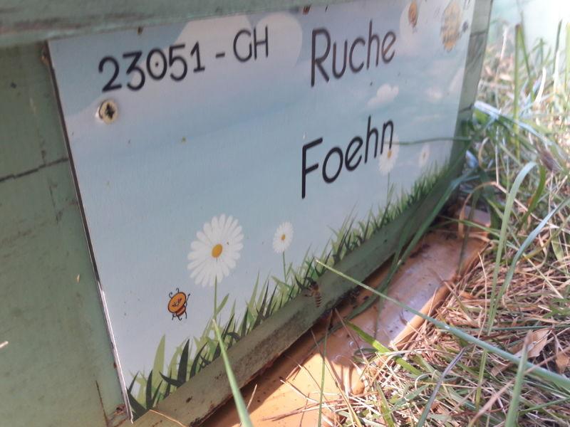 La ruche Foehn