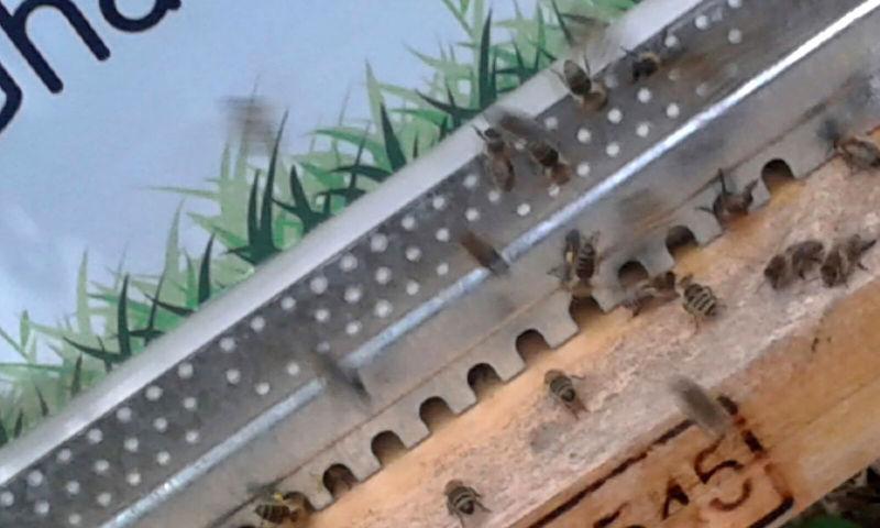 La ruche Gharbi