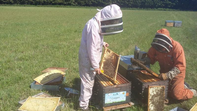 La ruche Grégale