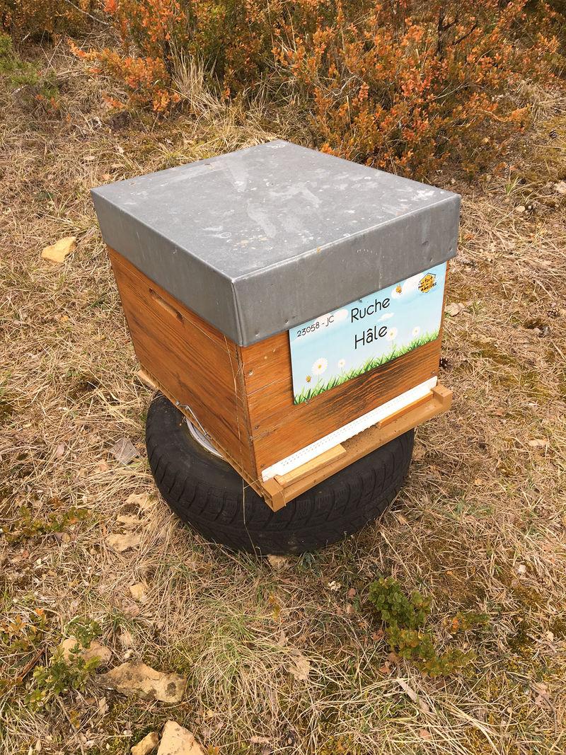 La ruche Hâle