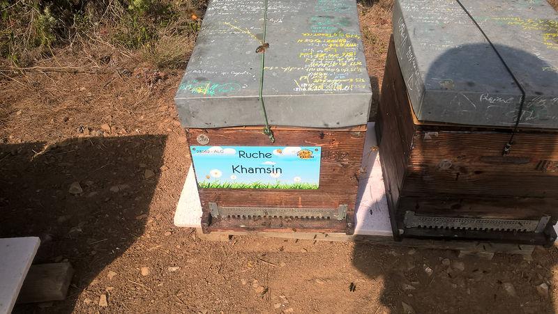 La ruche Khamsin
