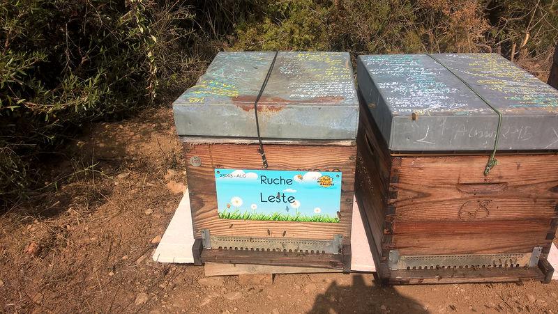 La ruche Leste