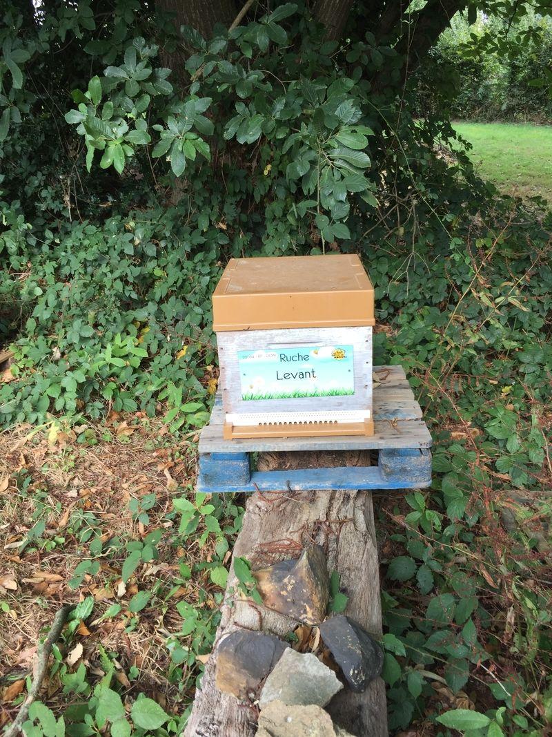 La ruche Levant