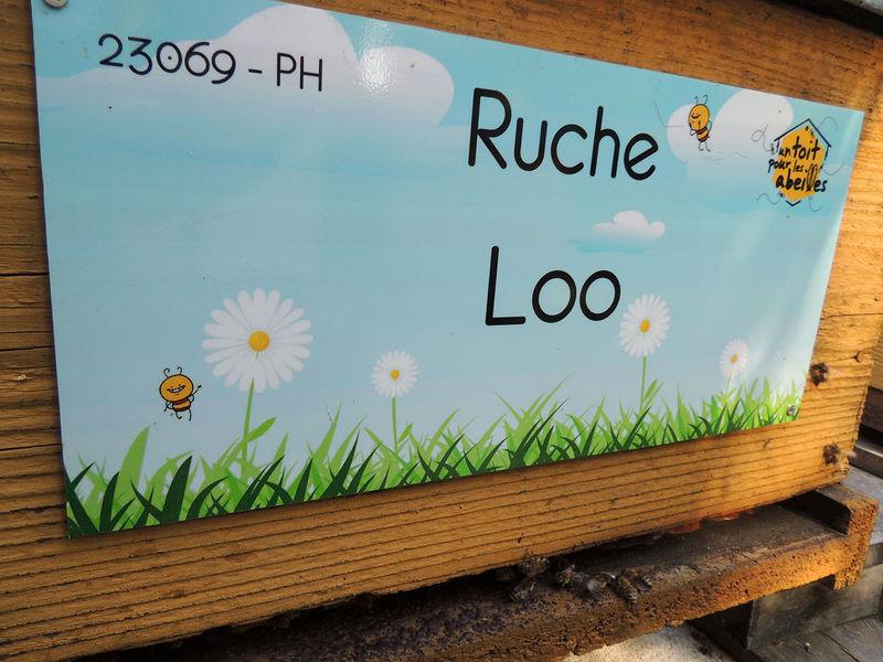 La ruche Loo