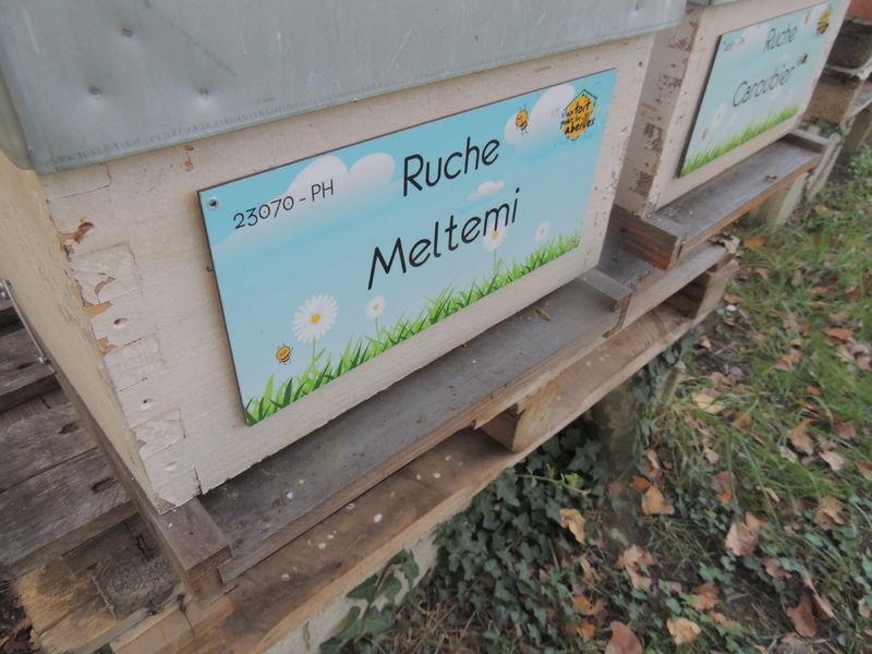 La ruche Meltemi