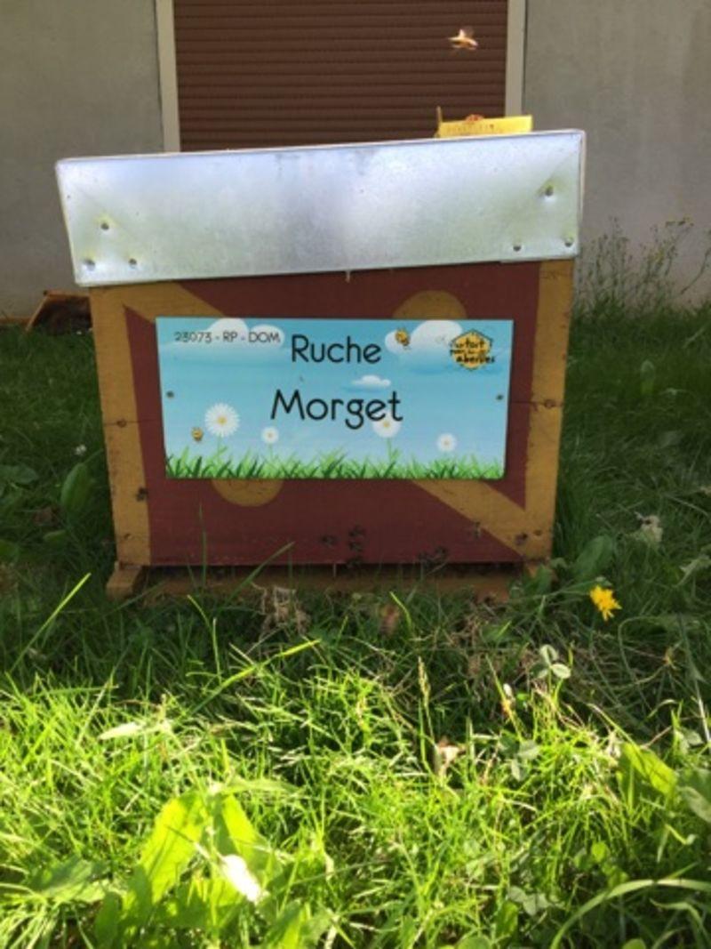 La ruche Morget