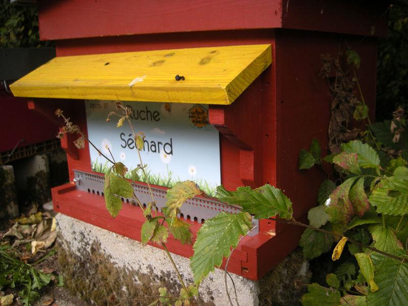 La ruche Séchard