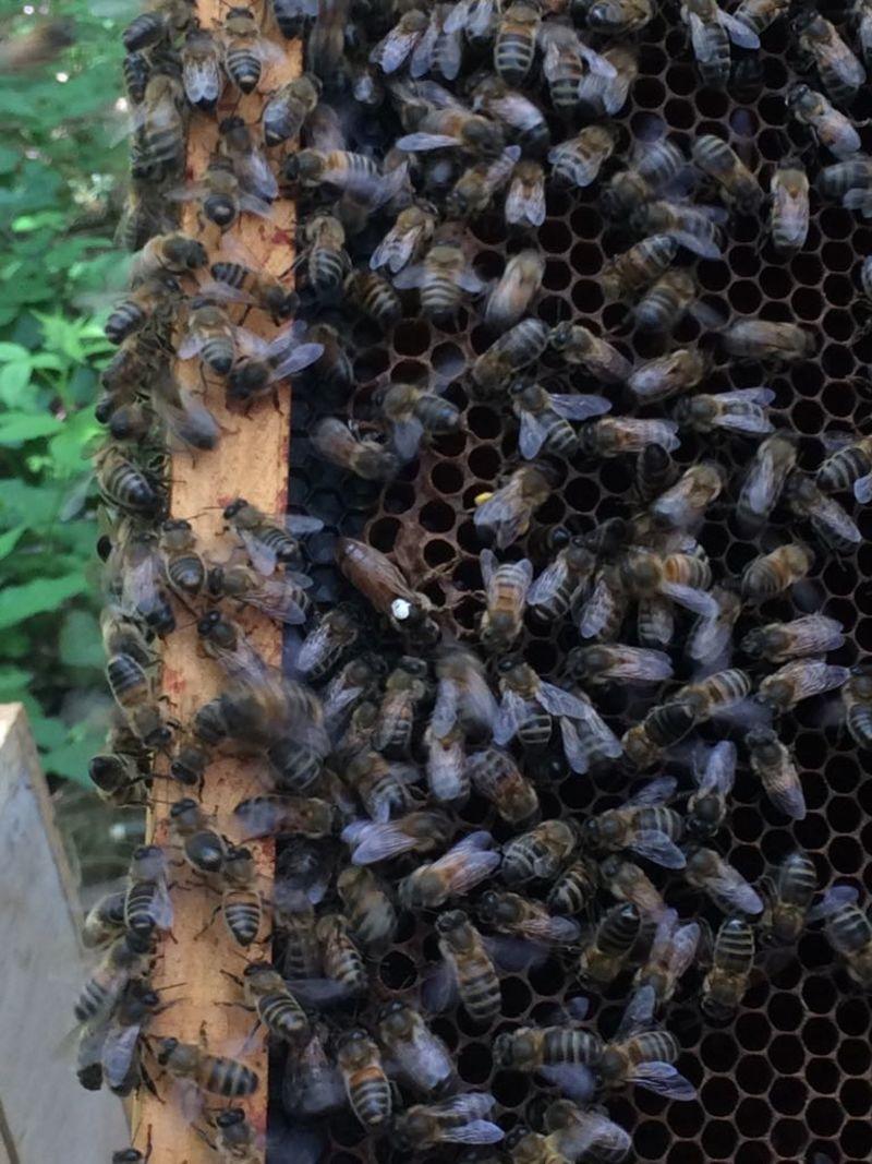 La ruche Suestadas