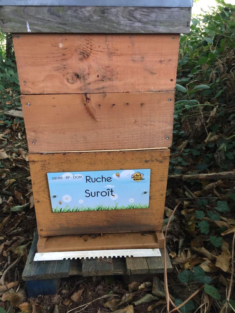 La ruche Suroît