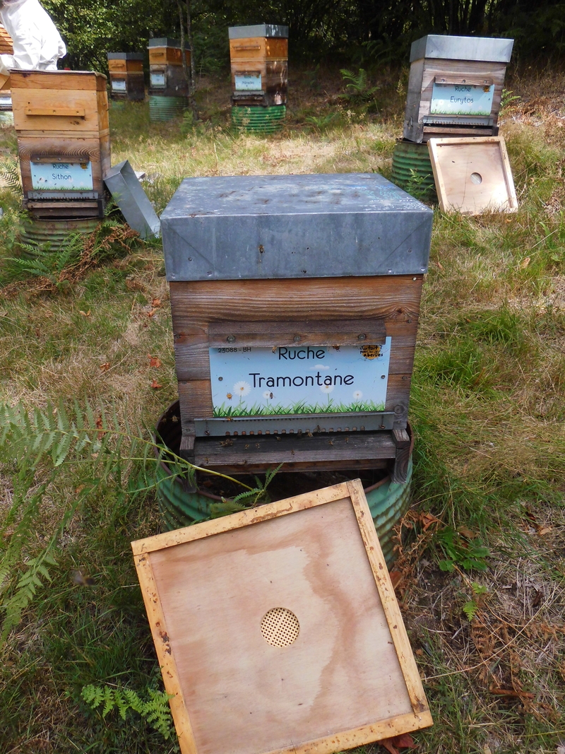 La ruche Tramontane