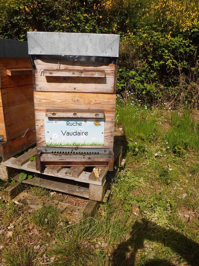 La ruche Vaudaire